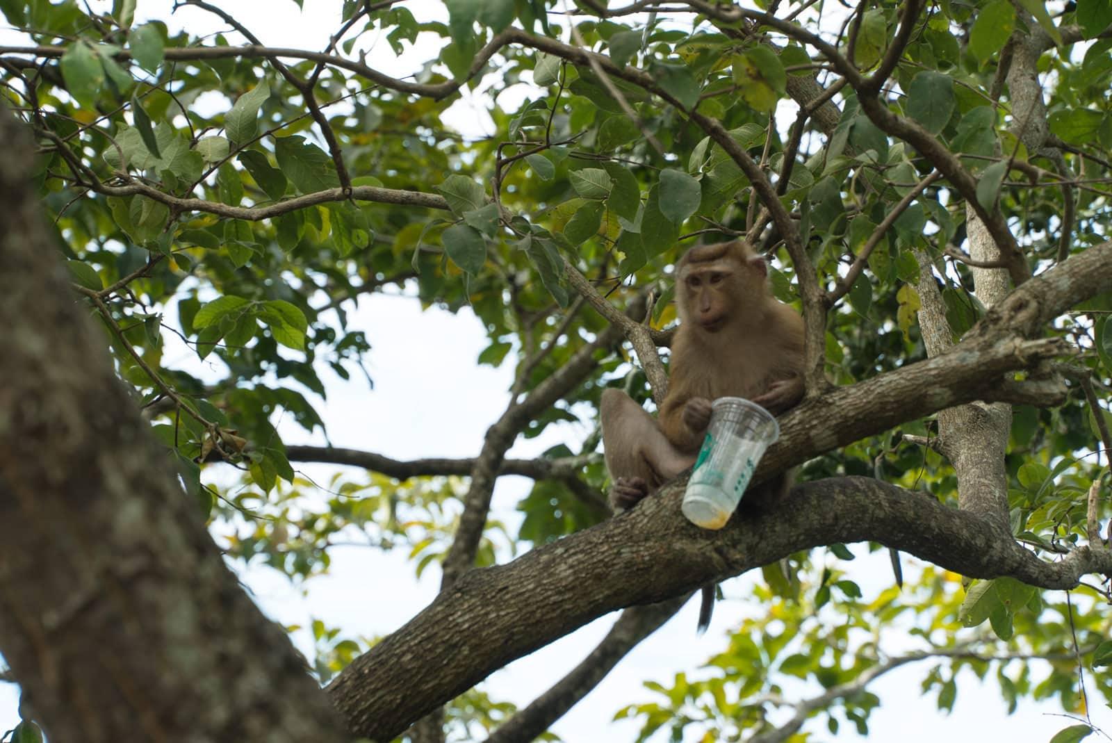 Ein Affe mit einem Getränk