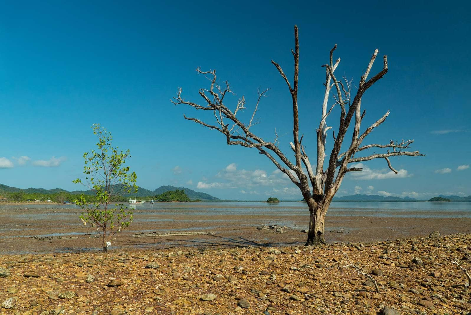 Tree in the Sea Koh Lanta