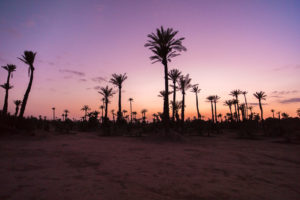 Palmen Marokko Magrheb
