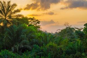 Regenwald Liberia Westafrika
