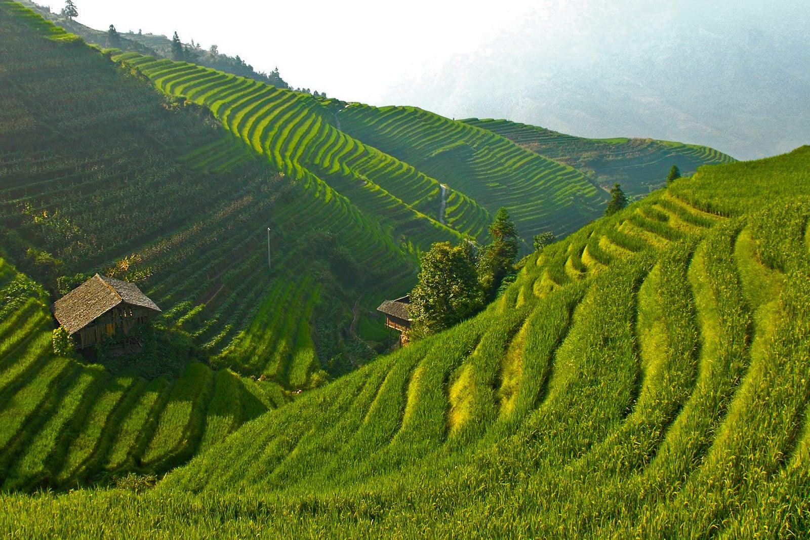 Reisterrassen in China, das typische Bild in Asien