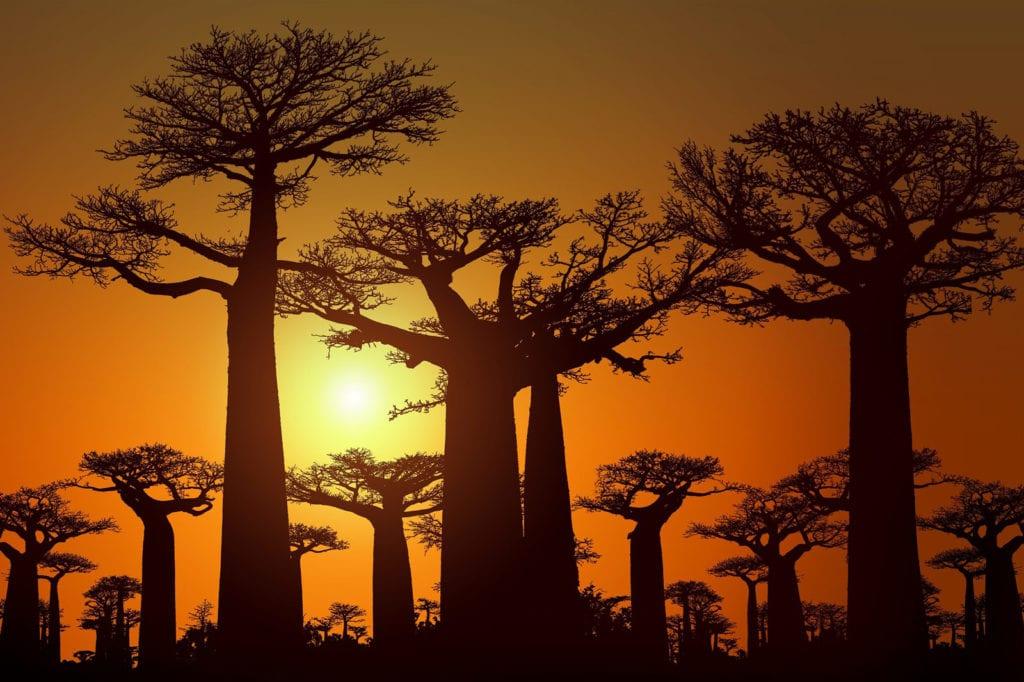 Sonnenuntergang In Madagaskar Ostafrika