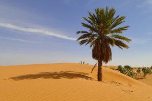 Wüste in Mauretanien